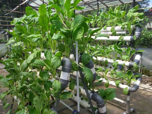 Hydroponic At A Glance Indmira